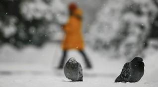Снегът спира, студът остава, температурите най-много до -2°С в неделя