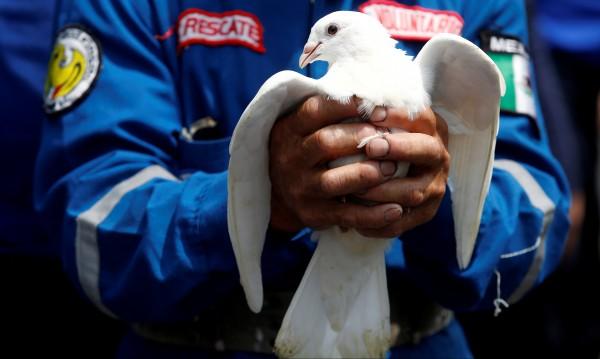 Китаец счупи рекорда – купи гълъб за 1, 25 млн. евро!