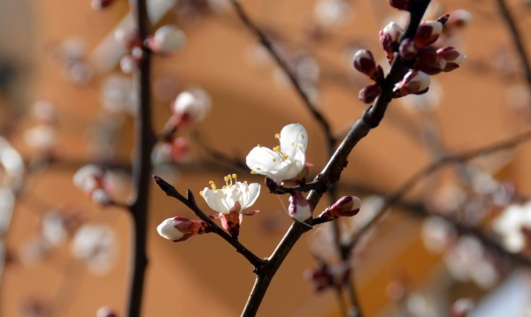 Пролетта идва с вятър и дъжд, температурите ще се понижат
