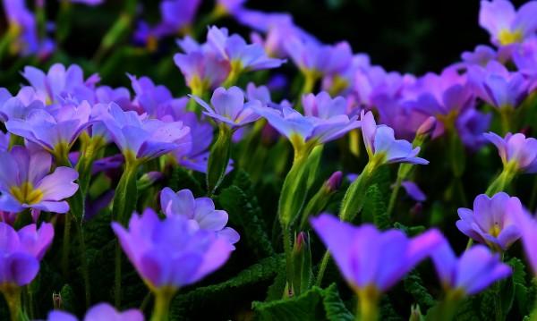 Първият ден на пролетта: Облачен с превалявания