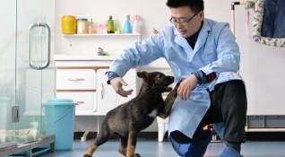 Първото клонирано полицейско куче - в академия за обучение