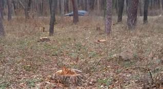 Спасителна операция: Откриха загубило се 9-годишно дете