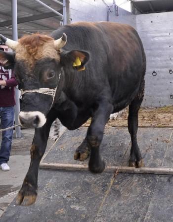 Откриха вирусни инфекции в животновъдни обекти в Ямболско