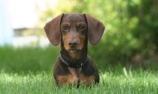 Кучетата са детектор за рак
