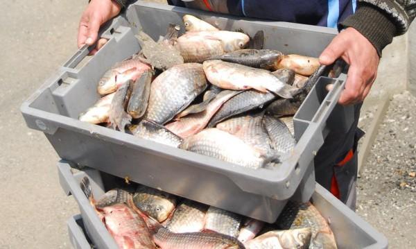 Мъж източи язовир и задигна 670 кг риба