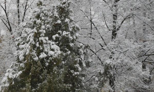 Априлски сняг валя във високите части на Смолянско