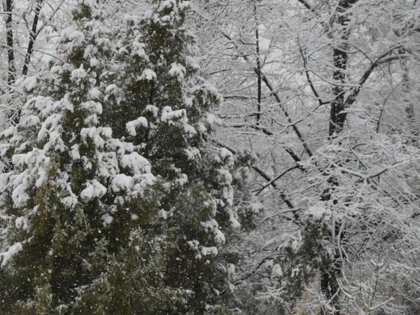 Високите части на Смолянска област побеляха днес от априлски сняг.