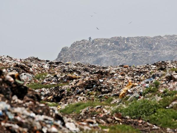 Експертната група към ООН за биоразнообразието предупреди, че голяма част