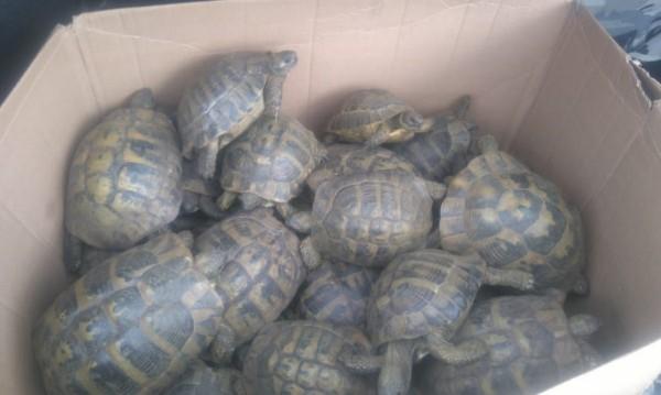 РИОСВ освободи 38 костенурки в Хасково