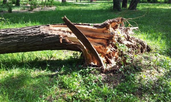 Дървосекач бере душа след трудова злополука