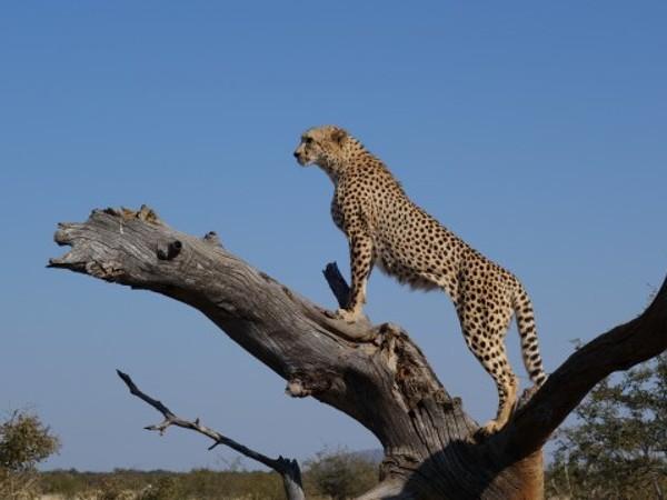 7 май е Международен ден на застрашените животински видове. Затова