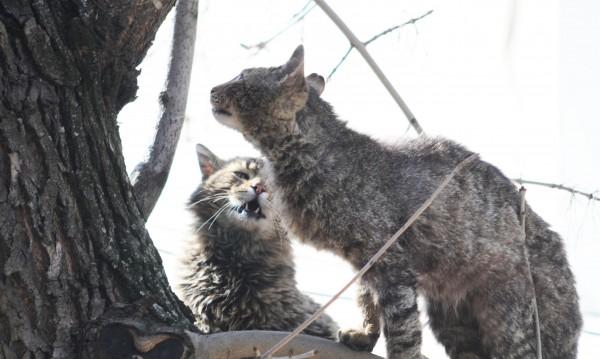 Ритник на бременна котка вкарва радомирец в затвора за 3 години?