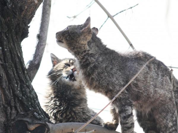 Радомирец е изправен на съд за проявена жестокост към котка,