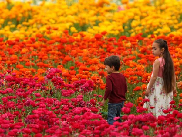 Честотата на алергичните заболявания в различните части на света е