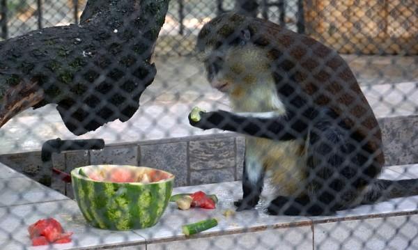 Търсят осиновители за част от обитателите на зоопарка в Айтос