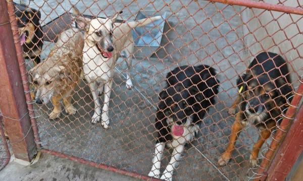 Над 20 хил. заловени бездомни кучета, осиновените под 4 хил.