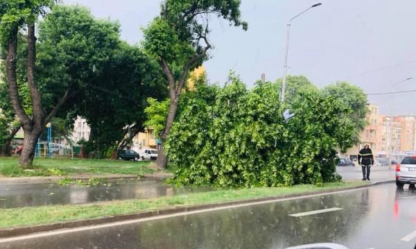Дърво падна върху кола на булевард във Варна