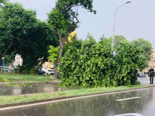 Голям клон на дърво падна върху лека кола на варненския