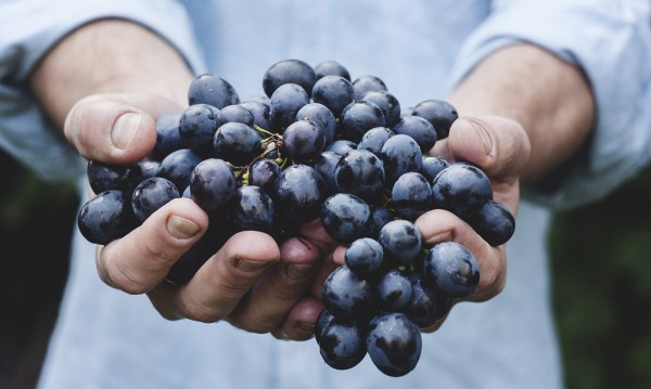 """Земеделското министерство с нов термин: """"Свеж плод"""" на пазара"""