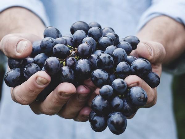 Българският пазар на плодове и зеленчуци има нужда от раздвижване