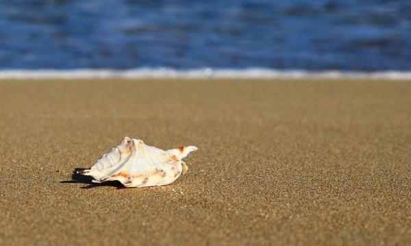 Погнаха незаконните туристически агенти по морето