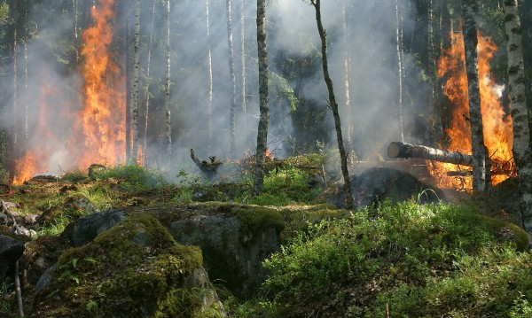 Голям пожар гори на втория ръкав на Халкидики - Ситония