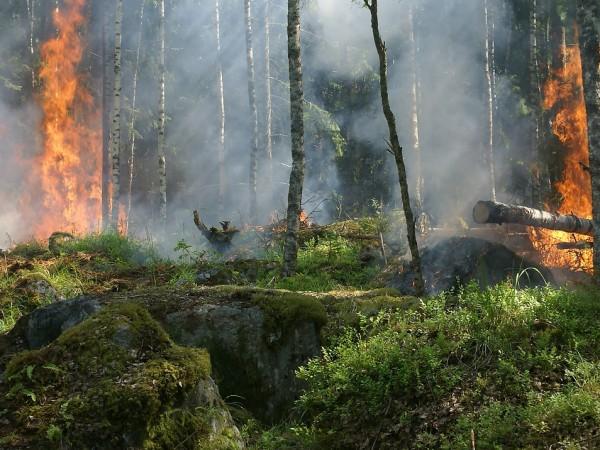 Гора и сухи треви са пламнали в района на Каламици,
