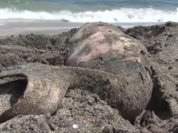 """Mорето изхвърли обезглавено бебе делфин край плаж """"Корал"""". Еколози смятат,"""