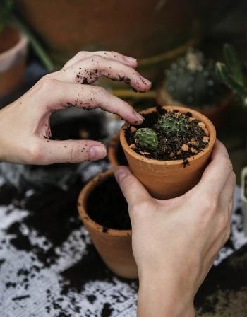 Според фъншуй: Какви растения да си купите?