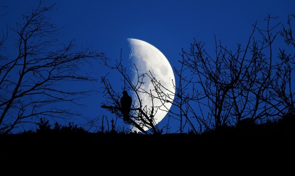 Русия планира кацане на Луната през 2030 година