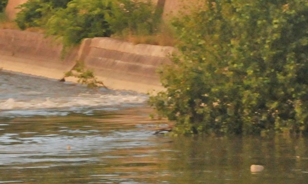 15-годишно момче се удави в река Огоста