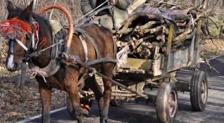 74-годишен загина при инцидент с каруца