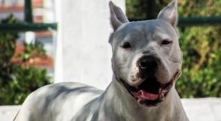 Десет пъти по-големи глоби за агресивно куче на улицата без намордник