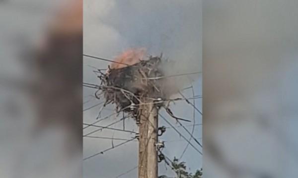 Тъжно! Пожар изпепели гнездо на щъркели, две малки изгоряха