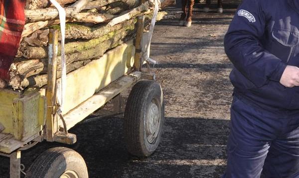 Горски от Берковица хванаха коне и каруци с незаконна дървесина