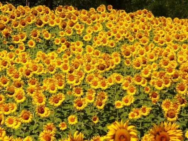 Жълт код за опасно високи температури е обявен за 21
