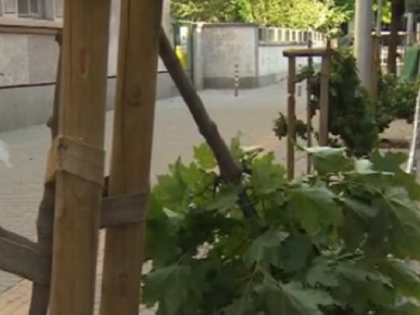 Вандализъм в центъра на София – унищожени са дръвчета на