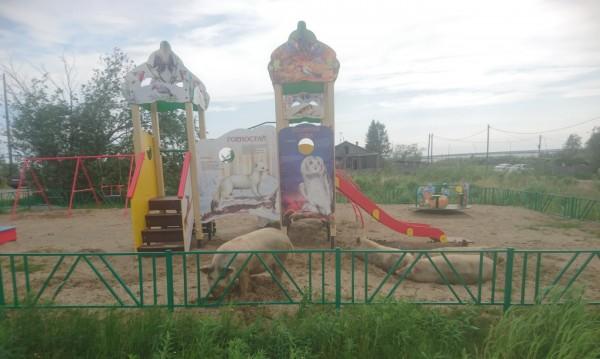 Арктически свине си играят на детска площадка в Русия