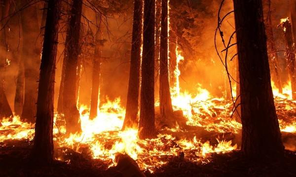 Стихиите в Гърция: На север буря, на юг – пожари