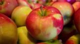 Включват биохраните в менюто в училищата и градините