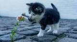 И Ню Йорк забрани рязането на ноктите на котките