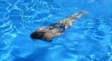 Всички открити басейни в Пловдив са изрядни