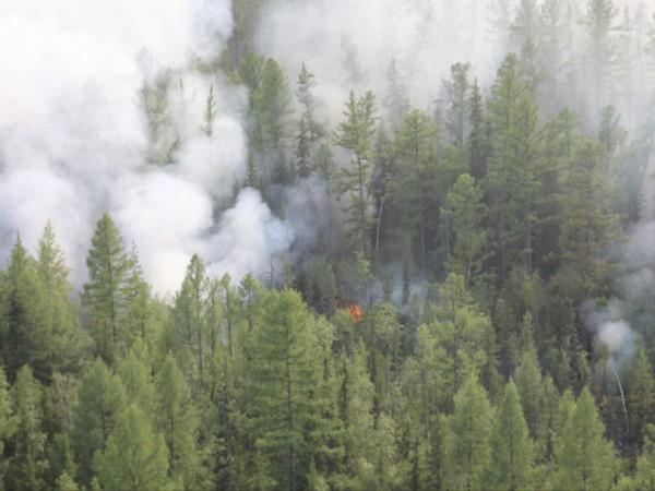 Снимка: Пожарът в Сибир: Горят над 1,5 млн. хектара гори