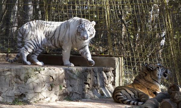 Stara Zagora Specheli Evropari Za Obnovyavane Na Zooparka Dnes Bg