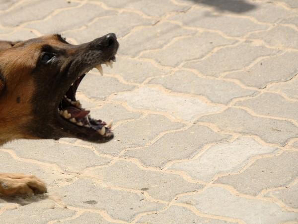 Дете е ухапано от безстопанствено куче в Дупница и е
