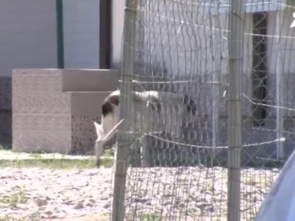 Бездомното куче, което нахапа преди ден 6-годишно дете в Дупница,