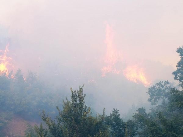 Голям пожар е възникнал на градското сметище край Свищов, съобщи