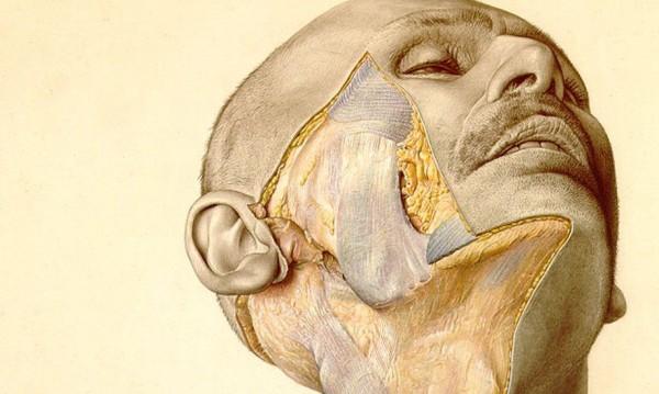 Нацисткият учебник по анатомия, който спасява животи и до днес
