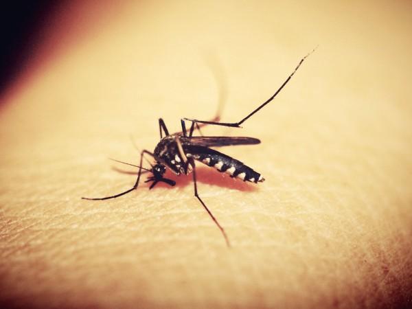 Случай на малария е установен в регистрационно-приемателния център за мигранти