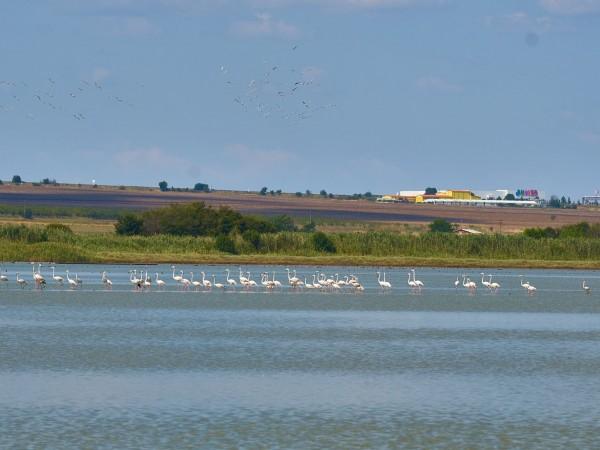 Атанасовско езеро се е превърнало в привлекателно място за розовите